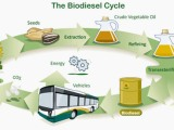 Biodiesel : Myths and Facts